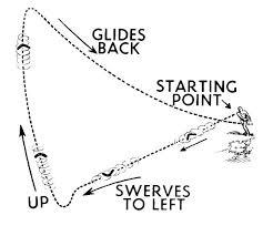 Boomerang Adults