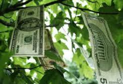 Money Does Grow In Trees?