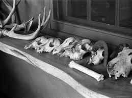 Upcycled Trash - Okeefe's Bones