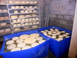 cheese-vats-shelves_opt