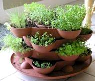 Plant an Indoor Herb Garden