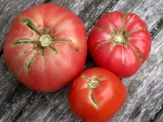 There's a lot of good tomato on these tomatoes.