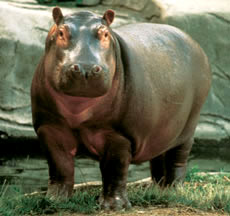 Is there an 8000 LB Hippo waiting for you on moving day?