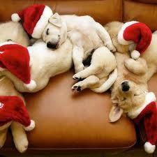 santa-pups